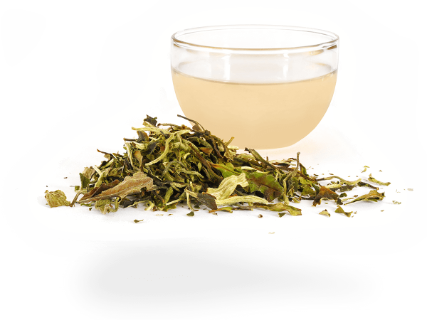 Weißer Tee Pai Mu Tan First Grade